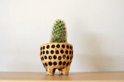 Cactus en la tabla Imagen de archivo