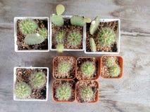 Cactus en la tabla de madera Foto de archivo