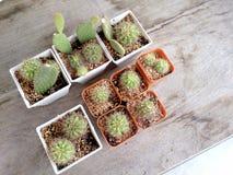 Cactus en la tabla de madera Imagen de archivo libre de regalías