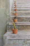 Cactus en laddle Imagen de archivo libre de regalías