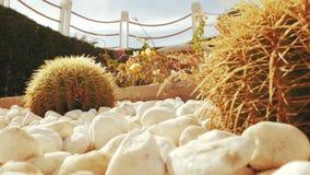 Cactus en las piedras blancas contra el cielo almacen de video