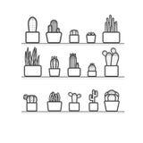 Cactus en los potes Fotos de archivo libres de regalías