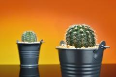 Cactus en los potes y el contexto de la falta de definición del cactus - concepto FO de un cubo Fotografía de archivo