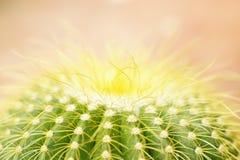 Cactus en luz del sol brillante foto de archivo