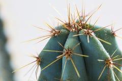 Cactus en maceta en el fondo blanco Imagenes de archivo