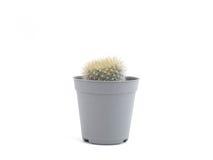 cactus en mini pote plástico Fotos de archivo libres de regalías