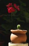 Cactus en orchidee stock afbeelding