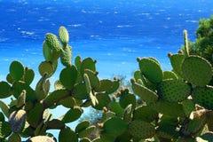 Cactus en overzees Stock Afbeeldingen