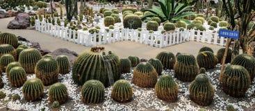 Cactus en parc à Chengdu, porcelaine Photographie stock
