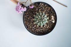 Cactus en pote del metal Fotografía de archivo libre de regalías