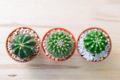 Cactus en pote en fondo arbolado Visión superior Imagenes de archivo