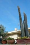 Cactus en potes en el jardín Imágenes de archivo libres de regalías