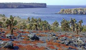 Cactus en Rode gronddekking, de Eilanden van de Galapagos stock afbeelding