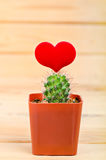 Cactus en rode harten op hout royalty-vrije stock foto