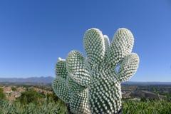 Cactus en Santiago Peak royalty-vrije stock fotografie