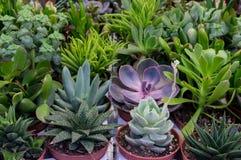 Cactus en succulente installaties Royalty-vrije Stock Afbeeldingen