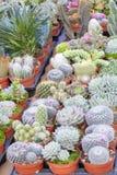 Cactus en succulente installaties in pot, op een bloemmarktkraam, de Provence, Frankrijk stock foto