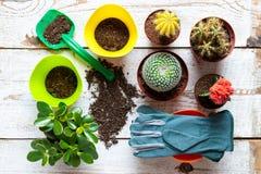 Cactus en succulents huisinstallatiesachtergrond Inzameling van diverse huisinstallaties, het tuinieren handschoenen, potting gro royalty-vrije stock foto's