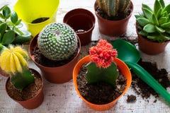 Cactus en succulents huisinstallatiesachtergrond Inzameling van diverse huisinstallaties, potting grond en troffel op witte achte stock foto's