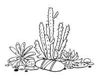 Cactus en succulents samenstelling De vectorhand getrokken illustratie van de overzichts zwart-witte schets vector illustratie