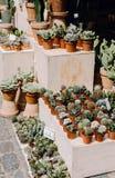 Cactus en succulents voor verkoop royalty-vrije stock fotografie