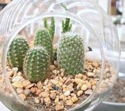 Cactus en tarro fotografía de archivo