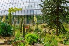 Cactus en un invernadero conservador imagen de archivo libre de regalías