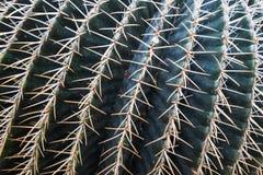 Cactus en un jardín botánico en Ginebra Fotos de archivo libres de regalías