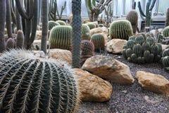 Cactus en un jardín botánico en Ginebra Imagenes de archivo