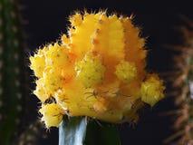 Cactus en un jardín interior Fotografía de archivo libre de regalías