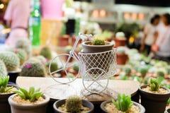 Cactus en un pote Imagen de archivo