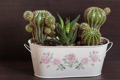 Cactus en un pote Imágenes de archivo libres de regalías