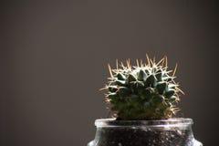 Cactus en un pote de cristal Fotos de archivo libres de regalías