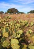 Cactus en un rancho fotos de archivo