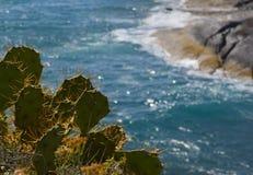 Cactus en una playa tropical Imágenes de archivo libres de regalías