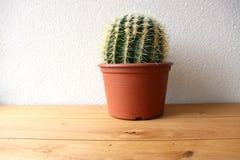 Cactus en una tabla de madera Imagen de archivo libre de regalías