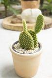 Cactus en una tabla en un café Foto de archivo libre de regalías