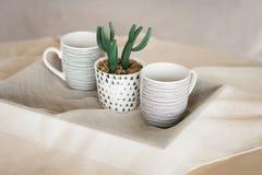 Cactus en una taza Una bandeja con las tazas en la tabla Hugge Imágenes de archivo libres de regalías