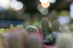 Cactus en una textura del fondo del pote Imagenes de archivo