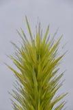 Cactus en verre Images stock