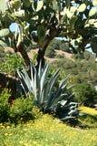 Cactus en wildflowers stock afbeeldingen