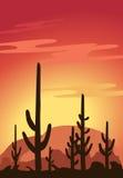 Cactus en Woestijn vector illustratie
