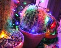 Cactus enrrollados adornados para la Navidad foto de archivo
