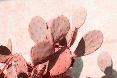 cactus entonado en coral de vida imagen de archivo
