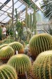 Cactus esotico in un giardino botanico Fotografia Stock Libera da Diritti