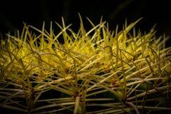 Cactus espinoso Imagenes de archivo