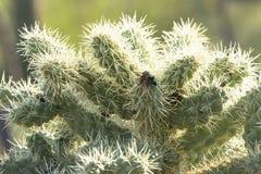 Cactus espinoso foto de archivo