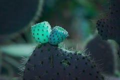 Cactus espinoso del resplandor surrealista del extracto con las peque?as frutas fotos de archivo libres de regalías