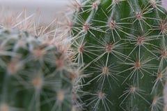 Cactus espinoso dos Fotografía de archivo