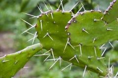 Cactus espinoso en naturaleza fotografía de archivo libre de regalías